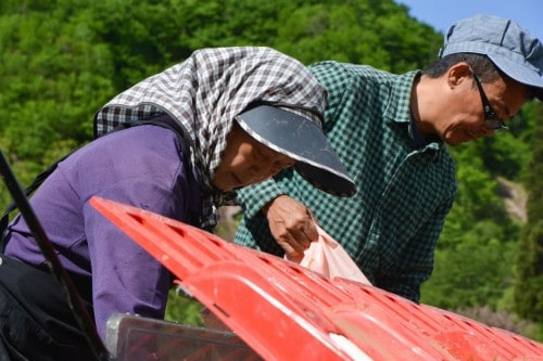Farmhüte um das Gesicht vor der Sonne zu schützen, Takane, Niigata, Japan