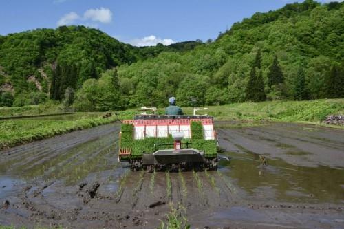 Fahren der Reispflanzmaschine in Takane, Niigata, Japan