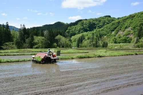 Bauernarbeit in Takane, Niigata, Japan