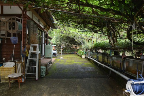 Guesthouse Gardens in Saiki city, Oita prefecture, Kyushu.