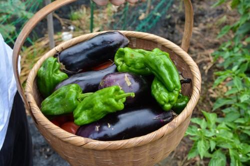 The vegetables we got at the farmer's inn, in Saiki city, Oita prefecture, Kyushu.