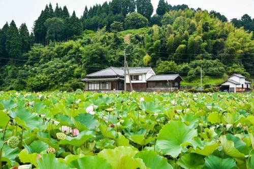 Mangatsu-ji temple which is famous for the lotus garden, Usuki, Oita, Japan.