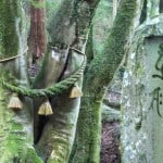 Kunisaki's Rokugo Manzan: The Sacred Mountain