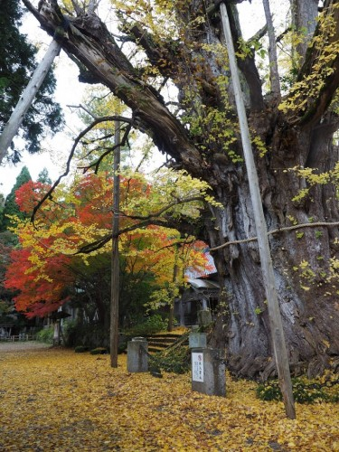 The autumn leaves in Himi city, Toyama prefecture, Japan.