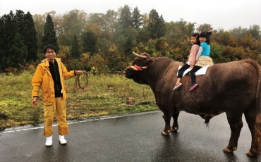 The bull culture in Yamaksohi