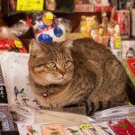 Shibamata, Tokyo: Discover the Charming Highlights of this Small Town