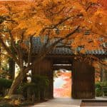 Admire the Colors of Autumn at Daikozenji Temple