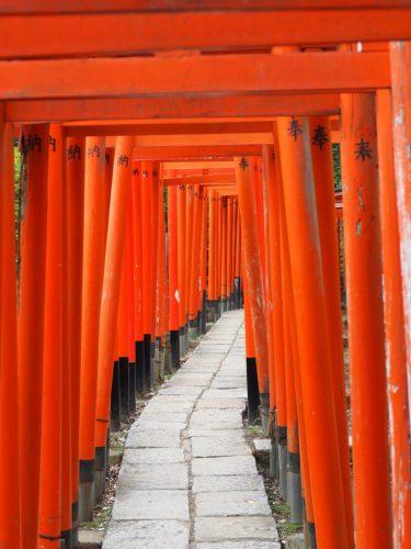 Nezu jinja Torii Gates at Yanesen area  in Tokyo, Japan.