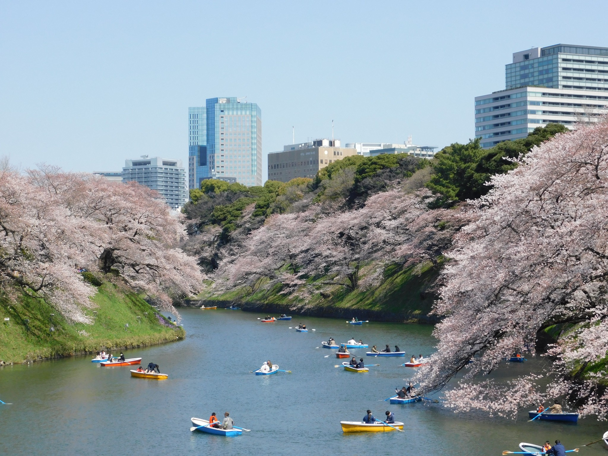 Cherry Blossoms Viewing Through Tokyo
