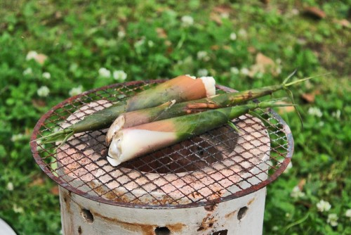 Bamboo Forest Takenoko Shoots Kagoshima Prefecture Local Cuisine Japan
