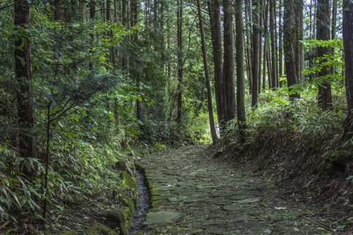 Forest crossing during the Nakasendō hike, Gifu prefecture, Japan