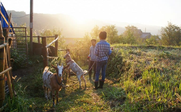 Green Tourism, Farm Stay Experience, Oita Prefecture, Kyushu
