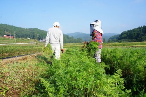 Enjoy Green Tourism with a Farm Stay Experience in Oita Prefecture