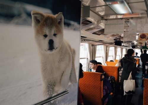 Pictures of Akita puppies on the Akita Nairiku train.