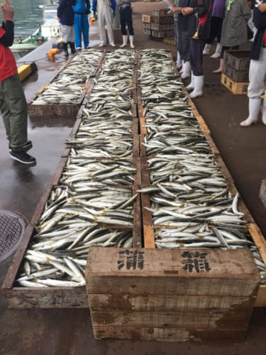Fish auction in Saiki