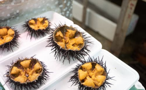 Sea urchins from the Sanriku Coast.