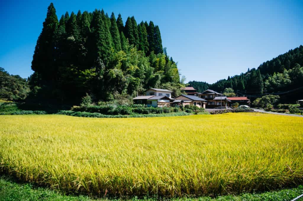 Cycling tour of the Aso Kujo region of Kumamoto
